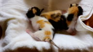 Five 1 week old kittens
