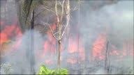 Flames consume the trees in a rainforest in Brazil. Amazon-jungle