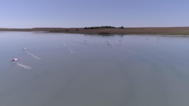 Flamingo cluster in een ondiep meer in Anatolië