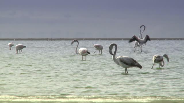 Flamingos in Bucht von Walvis Bay