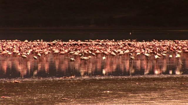 flamingos in desert