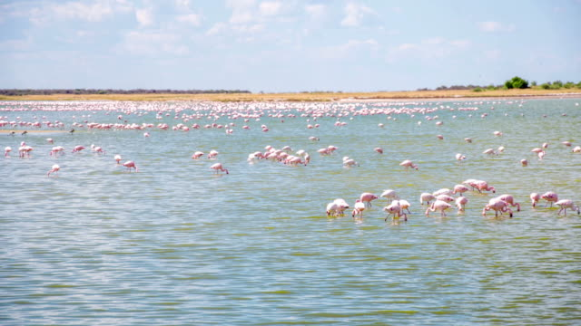 WS Flamingos In The Lagoon