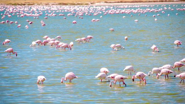 WS Flamingos In The Lake