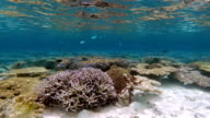 Flat coral reef on Maldives