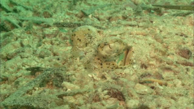 Flat fish, eye close up. Borneo, Malaysia, Southeast Asia