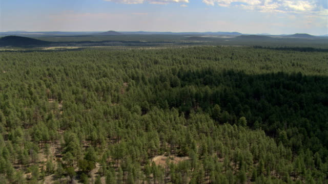 Flight above miles of Arizona evergreen forest toward hills on horizon