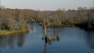 Flight Drifting Down Creek In Bull Neck Swamp Research Forest  - Aerial View - North Carolina,  Washington County,  United States