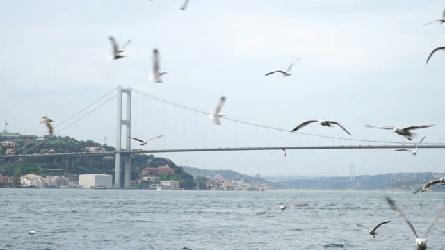 Flight Of The Seagulls with Bosphorus Bridge