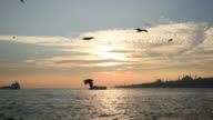 Flight Off The Seagulls with Istanbul Landscape