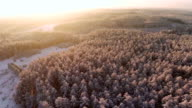 Flight over the forest in winter aerial shot