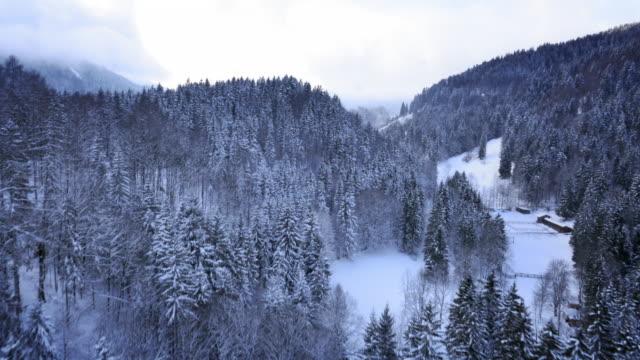Luftaufnahme der Flug über die winter spruce tree forest