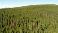 Flight Over Trees To Reveal Anaconda Range In Distance  - Aerial View - Montana,  Fallon County,  helicopter filming,  aerial video,  cineflex,  establishing shot,  United States