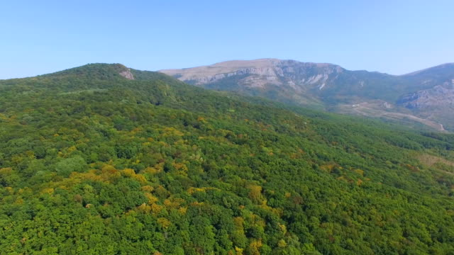 AERIAL: Flight over woodlands towards mountains