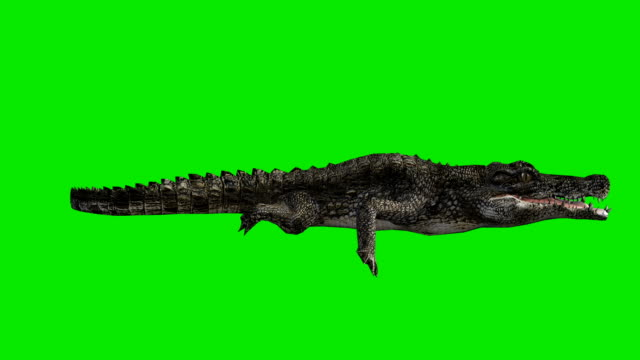 Floating Crocodile Green Screen (Loopable)