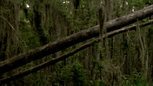 Floating past a fallen tree in a Louisiana swamp. Available in HD.