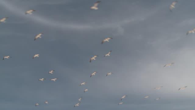 A flock of birds flies over a beach in Gulfport.