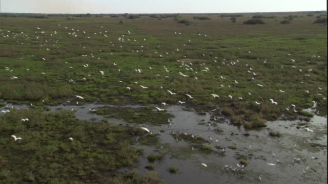 A flock of birds flies over wetlands in Pantanal, Brazil. Available in HD.