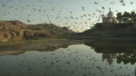 WS, Flock of birds flying above pond and Jaswant Thada, Jodhpur, Rajasthan, India
