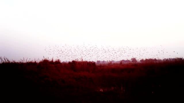Zwerm vogels vliegen in v-formatie