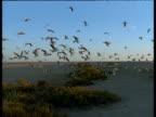 Flock of gulls hover in blue sky over salt flats, Australia