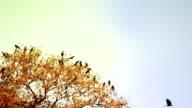 Schwärme der Vögel sitzen auf Baum