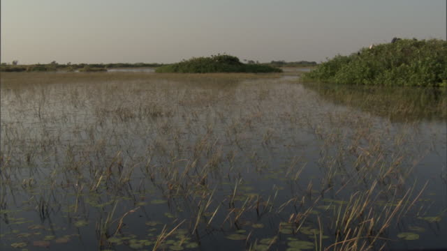Flood waters cover a marsh. Available in HD.