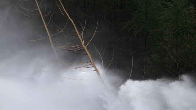 HD Flood Waves Destroying Trees Slow Motion