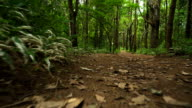 floor view: walking in trail at tropical forest in North of Thailand