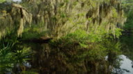 USA, Florida, Oscar Scherer St Park, Trees over pond