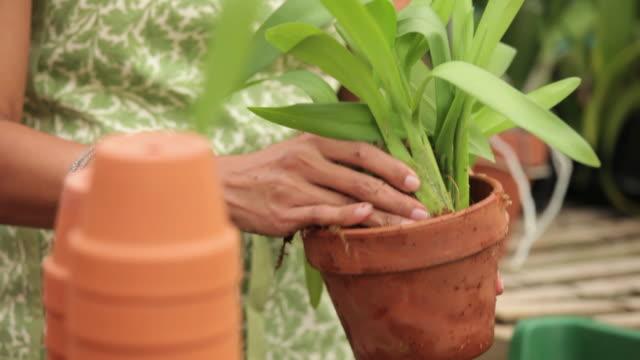 CU TU Florist Repotting Orchid in Greenhouse / Richmond, Virginia, USA