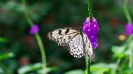 Blume und Schmetterling in Zeitlupe