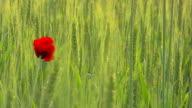 Blüte und der Wind