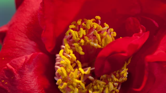 Flower Blooming Time-Lapse in Studio City