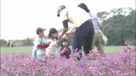 Flower Gathering At Rakkyo Field, Tottori, Japan