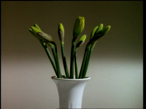 T/L flower - Vase of Daffodils, hand adds one to vase, flowers open then hand removes one, pale background