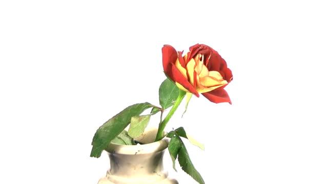 flower wilt in vase