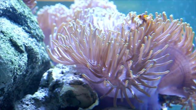 Flower-like sea animal on stone beside.