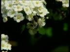 Flowers CS Bee on flowers Trees overhanging cemetery containing bodies of victims of Mauthausen concentration camp CMS Gravestone carved with star of...