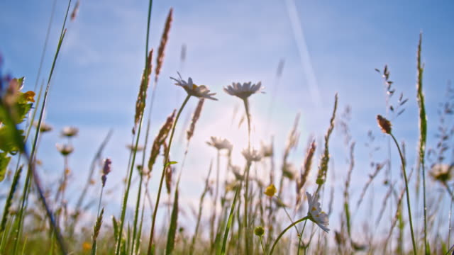 SLO MO Flowers in the meadow