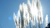 flowers of grass in sky