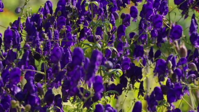 Flowers on Cortes Island