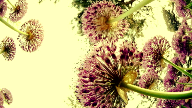 Blumen unter Himmel
