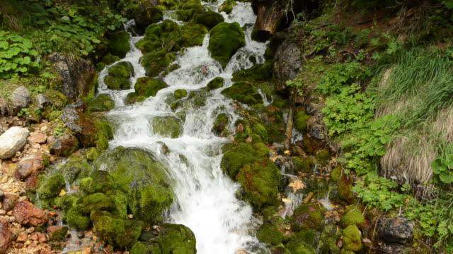 Flowing creek background