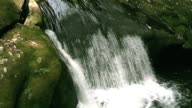 Flowing Water in Japanese Mountain Forest