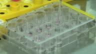 CU Fluid being tested in test tube / Ljubljana, Slovenia
