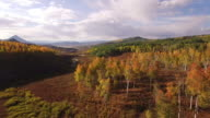 EPIC fly down aspen tree grove, Aerial, Aspen Trees, Foliage, Mountains, Beautiful Colors, Changing leaves, Colorado, Aerial 4K Nature/Wildlife/Weather Drone aerial video