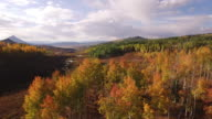 EPIC fly down aspen tree grove, Aspen Trees, Foliage, Mountains, Beautiful Colors, Changing leaves, Colorado, Aerial, Stock Video Sale - Drone Discoveries llc 4K Nature/Wildlife/Weather Drone aerial video