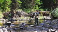 Fliegenfischen im Wald stream