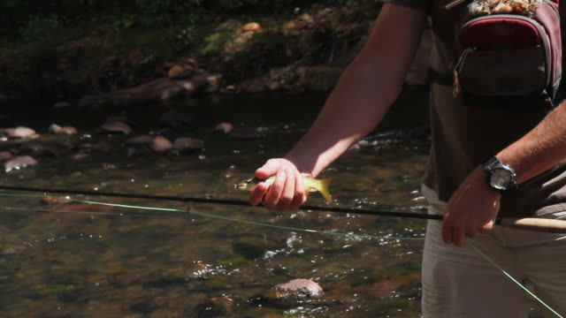 Fly Fishing - Small Trout