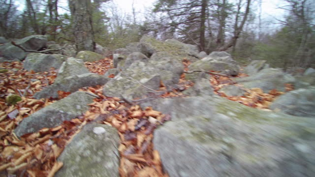 Fly over the rocky ground in the autumn forest